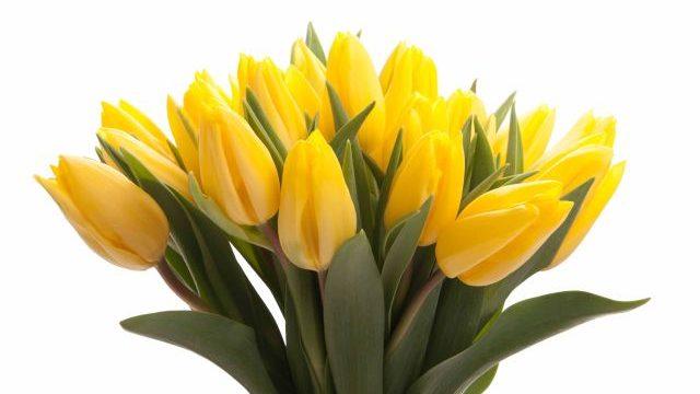 Harika görünüşü ile son baharın çiçeği Sarı lale anlamı