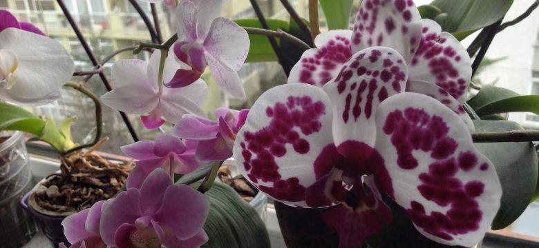 Zarafet dolu orkide sahipleri buraya Canlı orkide bakımı ve anlamı