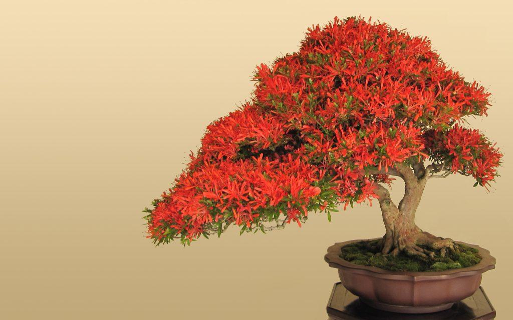 bonsai ağacı nasıl bakılır?