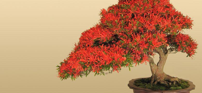 Bonsai Ağacı Nedir ve Bakımı nasıl yapılır?