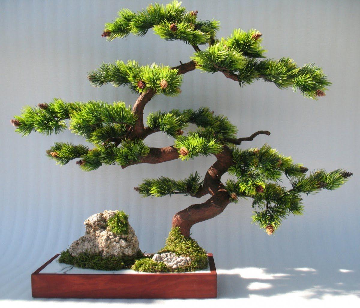 bonsai ağacı hakkında