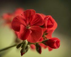 Saksı çiçekleri nelerdir? Saksı Çeşitleri tüm detayları burada !